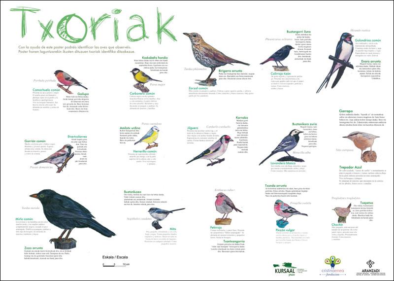 Póster de reconocimiento de las aves